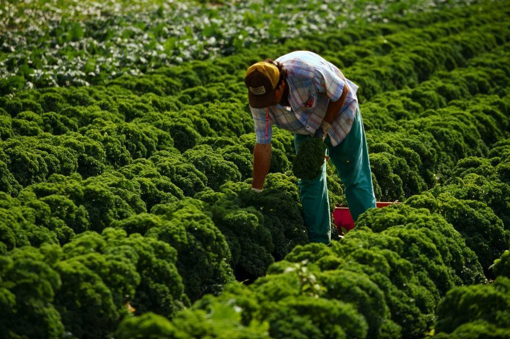 Organic kale is delicous!