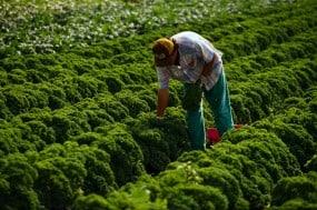 Atina Diffley, Turn Here Sweet Corn: Organic Farming Works