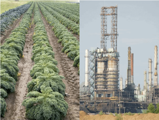 Image of Gardens of Eagan kale field juxtaposed with the Koch owned Flint Hills oil refinery.