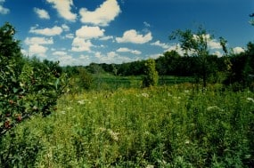 Apples, goldenrod, strawberries, violets, against the sky. Taken at the Gardens of Eagan in the 1980's before it was bulldozed for suburban development.