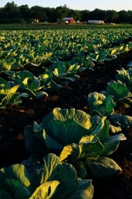 Cabbage and Diffley farmstead, photo by Dennis Nolan